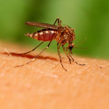 Lindungi Keluarga dari 4 Penyakit yang Ditularkan Nyamuk Ini
