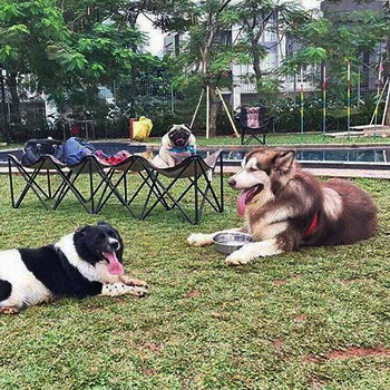Spot Outdoor Seru untuk Anak: Pet Kingdom Alam Sutera