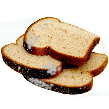Jamur di Roti. Bahaya, lho!